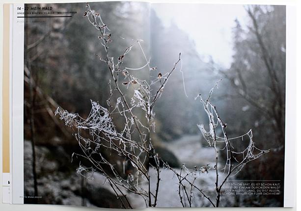 Wald_4_01