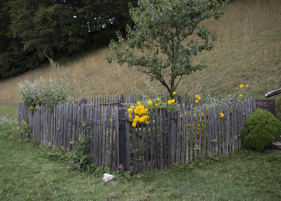 Alpbachtal_0533